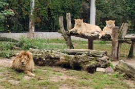 Płock Atrakcja Zoo Płocki Ogród Zoologiczny